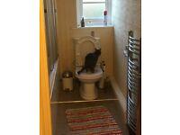Litter quitter (kwitter) cat toilet training kit