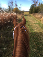 Trail Rides and Horseback Riding lessons/Horses for sale/Train