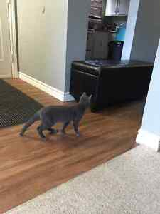 8 month old kitten for sale