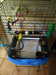 Big Strong Cage with stand and birds
