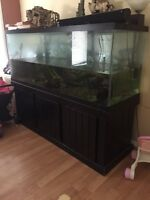 210 gallon fish tank