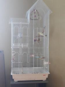 2 perruches avec cage, jouets et plus à vendre *Prix négociable*