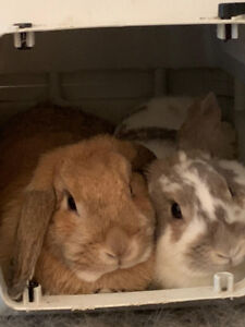 Beautiful Rabbits for re-homing!