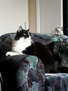 MISSING TUXEDO CAT