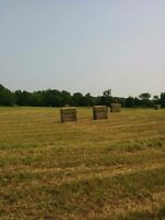 1st cut Large square bales for sale