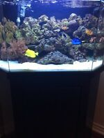40 gallon saltwater tank or best offer