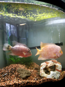 Fish for sale or trade