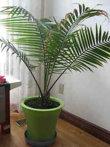 House Plants, starting from $10 Kitchener / Waterloo Kitchener Area image 3