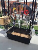 Parrots with cage male and female