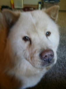 Dog Sitter/Boarder Needed