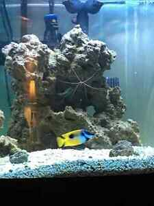 Saltwater setup and fish etc just over a year running.