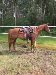Rope/ranch horse for sale