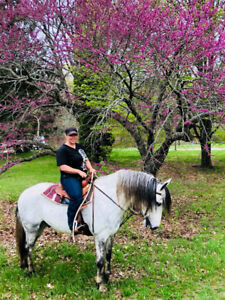 Horse back riding lessons and training