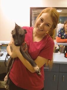 Megs Pet Sitting Services