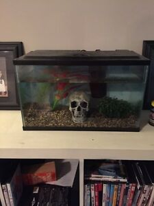 10 gallon aquarium with working filter and accessories
