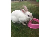 Our pet rabbit Elsa. Hutch, run and toys.