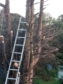 Tree .contruction..gardening