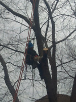Fully Licensed Tree Pruning/Removal
