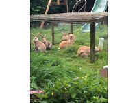 Reduced Rabbits
