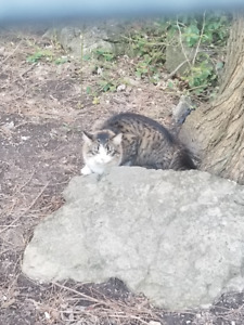 Cat Sighting - St.Clair and Deer Park Cres.