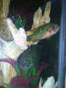 Several different kinds of fish for rehoming