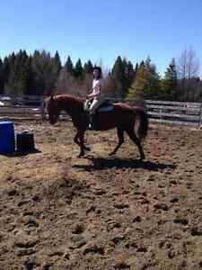 Several horses for sale!