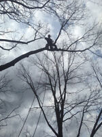 Tree pruning and removals