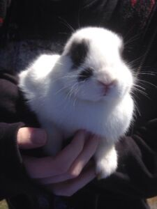 Baby bunny looking for home