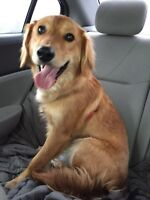 Medium sized mix breed dog looking for his forever home