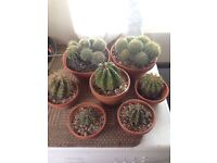 7 various cactus sizes small to large