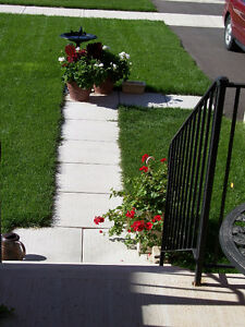 Residential Mowing Starting At $65, Cambridge Kitchener Area image 5