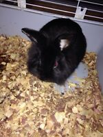 Free bunny looking for a good home