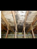 Certified Mould Inspector- ozone treatment, mould Inspection