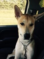 Chevy the basenji x T.Y.P.E rescue
