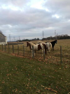 horse for sale ...4...horses