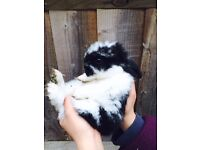 3 baby rabbits for sale