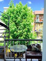 grand 3 1/2 Rosemont - Cachet - Boiseries - Dispo ! peinturé
