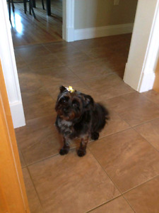 Missing Mixed Terrier Kingswood Area
