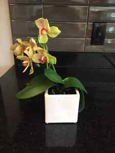 Urban Barn - Orchid Flowers - mint condition