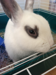 Friendly 5 Year Old Bunny + Cage/Supplies to a Good Home