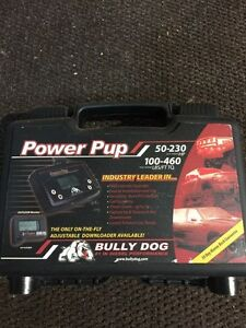Bully dog ... Power pup