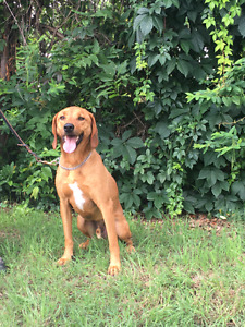 Dudley a Redbone X Looking for LOVE