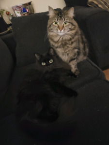Bandet (Right) has been REHOMED