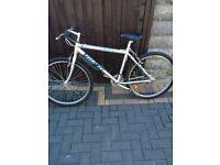 Gents aluminium mountain bike WILL DELIVER