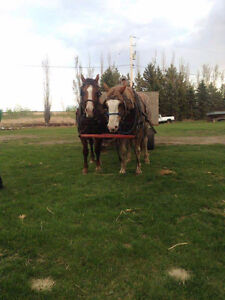 Horse drawn wagon or sleigh rides
