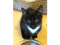 RESCUE KITTEN: Olivia (Female)