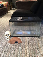 Glass cage, with 2 accessories Skull and cave