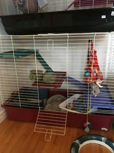 Plusieurs cages pour furet ou rat a vendre