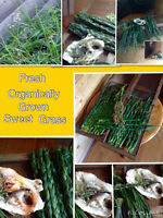 Organically grown sweet grass braides, cedar bundles...
