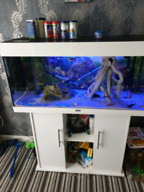 3ft hi gloss white jewel 180l fishtank and matching stand full setup